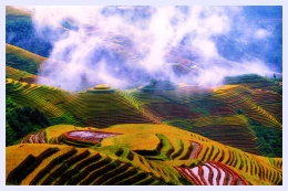 longji-terraced-field01