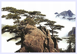 pine-valley-huangshan01
